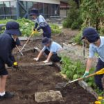 kids digging in vegetable patch