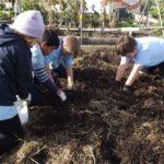 kids digging up spuds