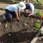 kids gardening planting vegetables