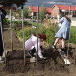 kids planting broadbeans