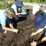 kids examining vegetable shoots in the garden